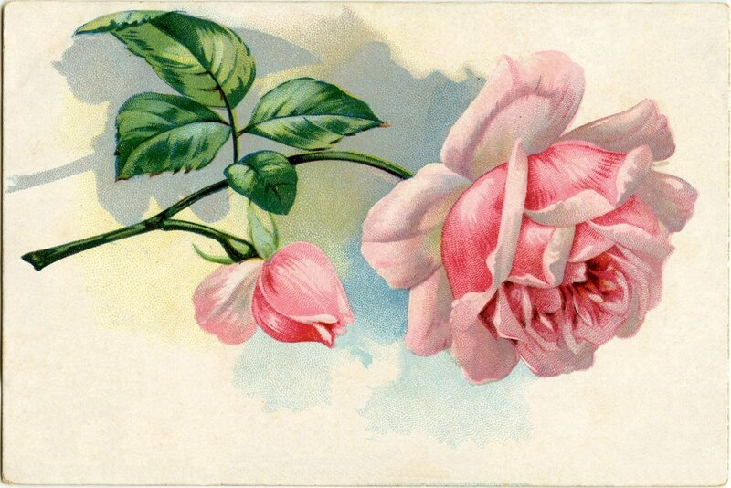 Free-Vintage-Images-Pink-Rose-GraphicsFairy2-1024x683