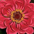 Fleurs de divers endroits