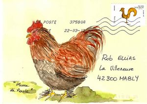 plume de poule