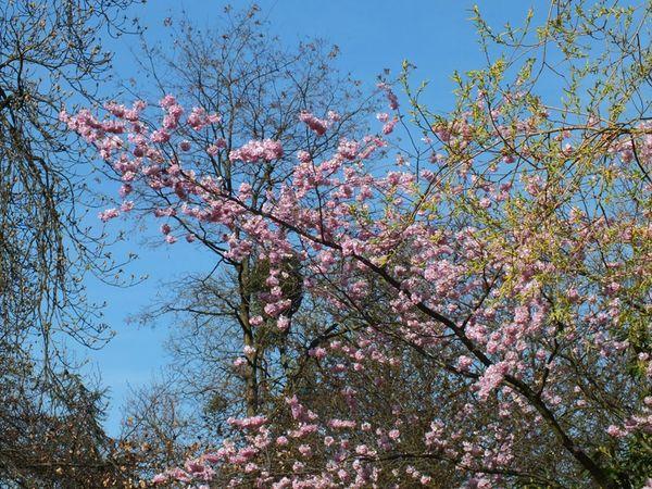 parc-floral-vincennes-printemps-fleurs-jonquilles-magnolias (1)