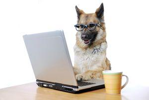 chien_travail