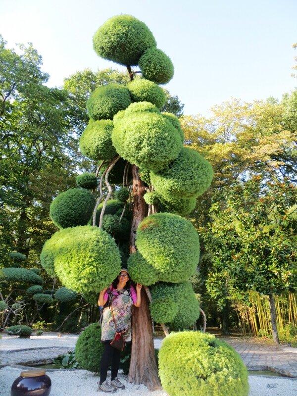 taille en nuage au parc floral d 39 orl ans sabrin 39 arbres. Black Bedroom Furniture Sets. Home Design Ideas