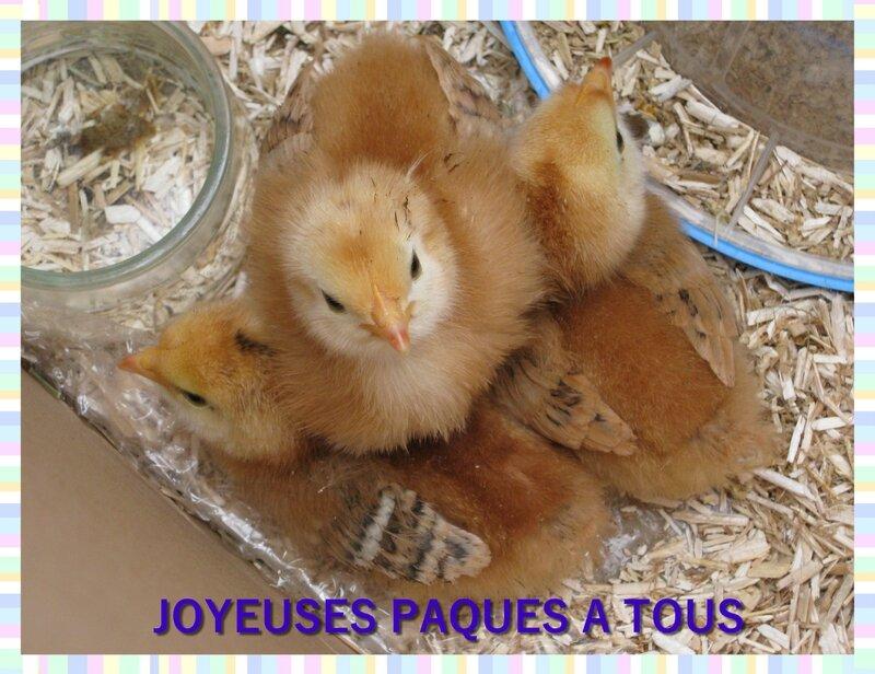 POUSSINS JOYEUSES PAQUES 2
