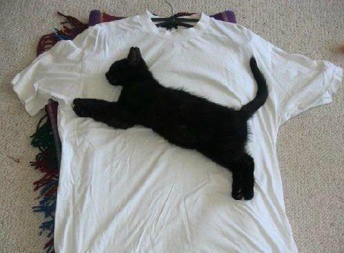 t-shirt-puma855