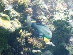 aquarium_7_perroquet