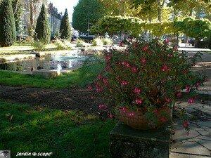Fuchsia_bassin