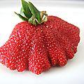 Oh la belle fraise ! (64)