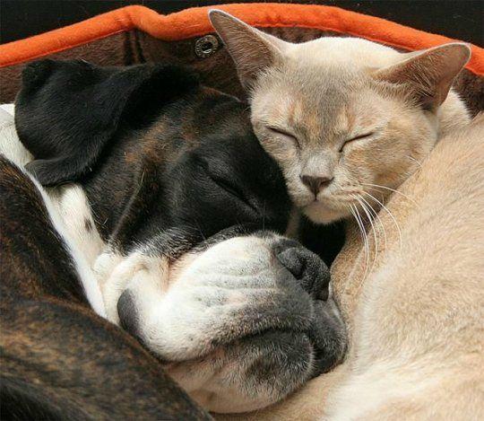 chiens chats mignon