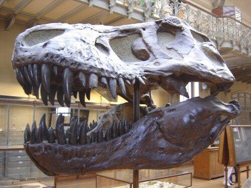 au Musée d'anatomie comparée