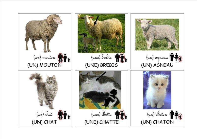 loto des animaux de la ferme images 4