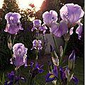 Windows-Live-Writer/jardin_6BD4/DSCF3560_thumb