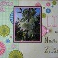 lin de Nouvelle-Zélande