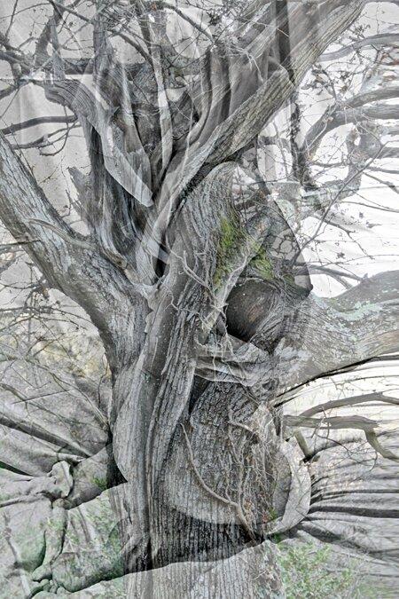 Cri forestier