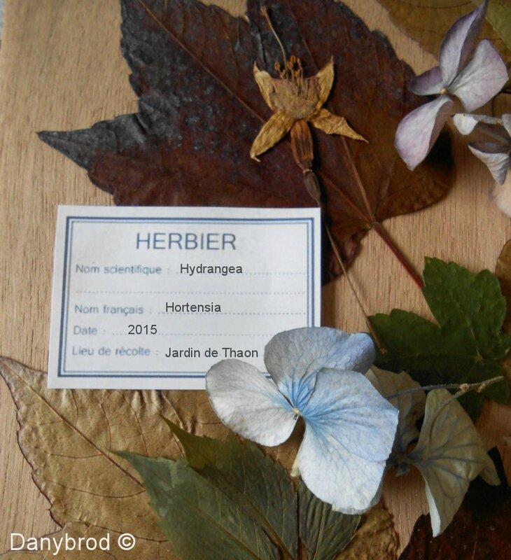 herbier10