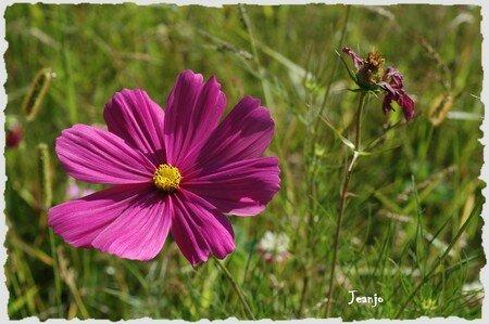Fleurs_D
