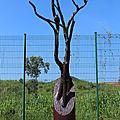 Foret : chêne rouge, bois flotté, pierre bleu, h : 4 m 10