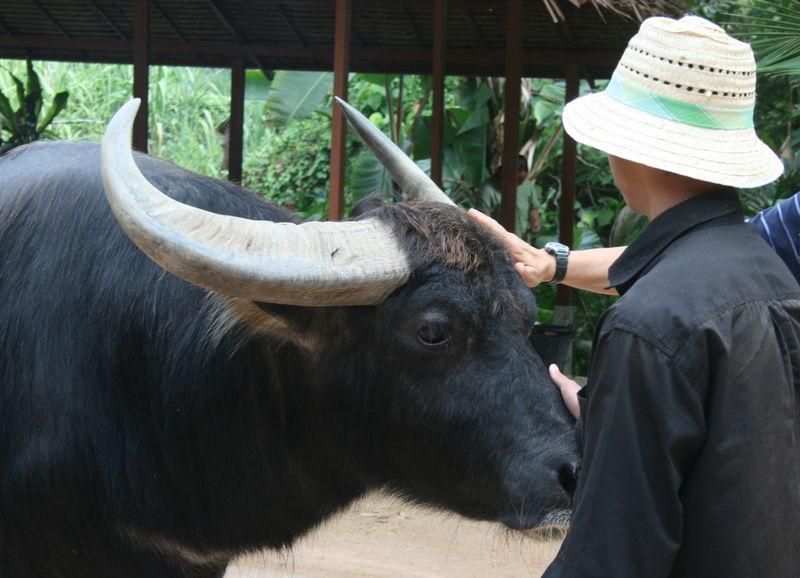 safari 113