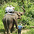 treck eleph P1190338
