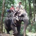 phang nga_sealand park_trekking éléphant_04