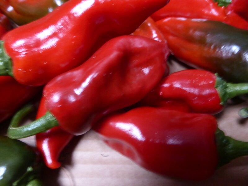 6-piments d'espelette (3)