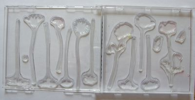 CD tampons clear grandes fleurs
