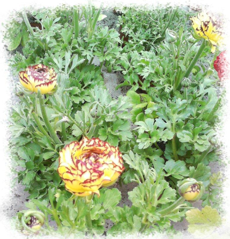 Que faire au jardin au mois de mars jardinerie du jangoux - Que faire au jardin en avril ...