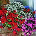 Fleurir son balcon avec les collections petits prix [jardin express]