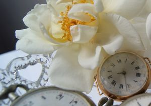 2011_05_14_roses7