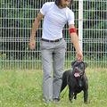 Nationale d' elevage du cane corso à chartres