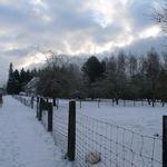 Virton_et_saint_mard_sous_la_neige__101_