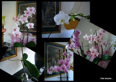 orchid_es1