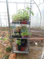 23-plants serre (2)