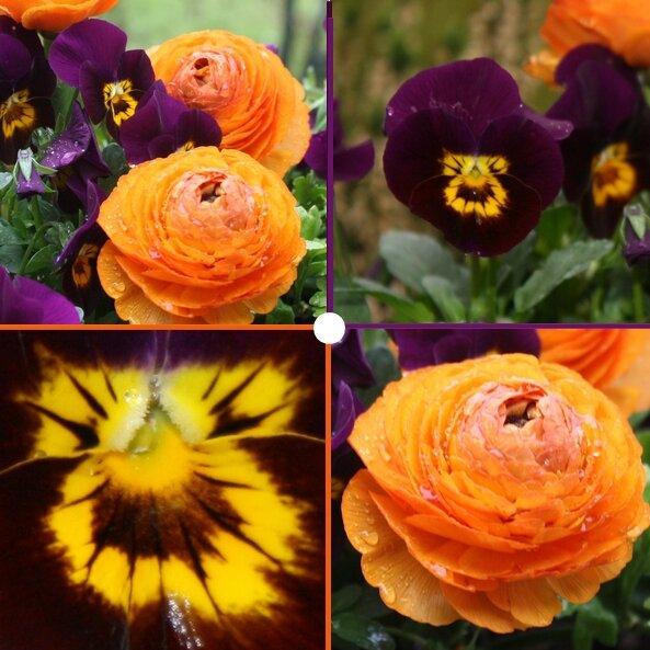 jardinière-de-printemps-2015