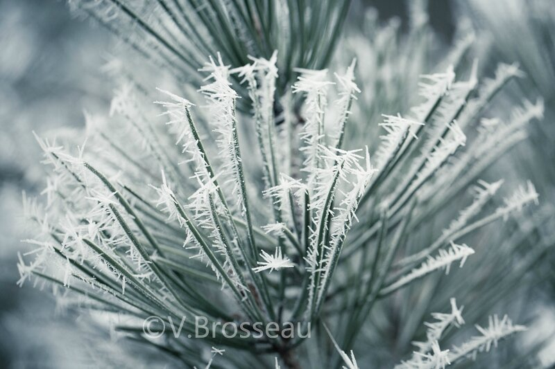 pin-givre15-04