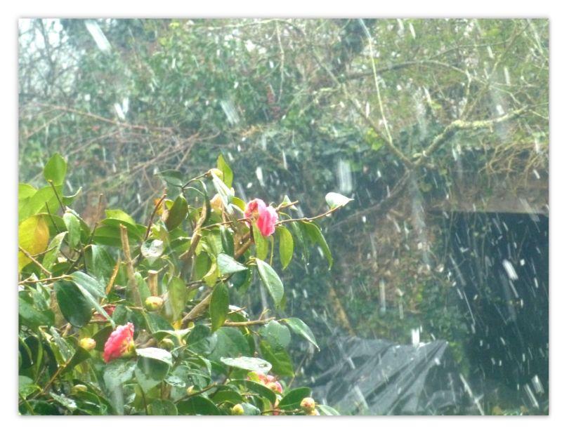 neige_de_paques