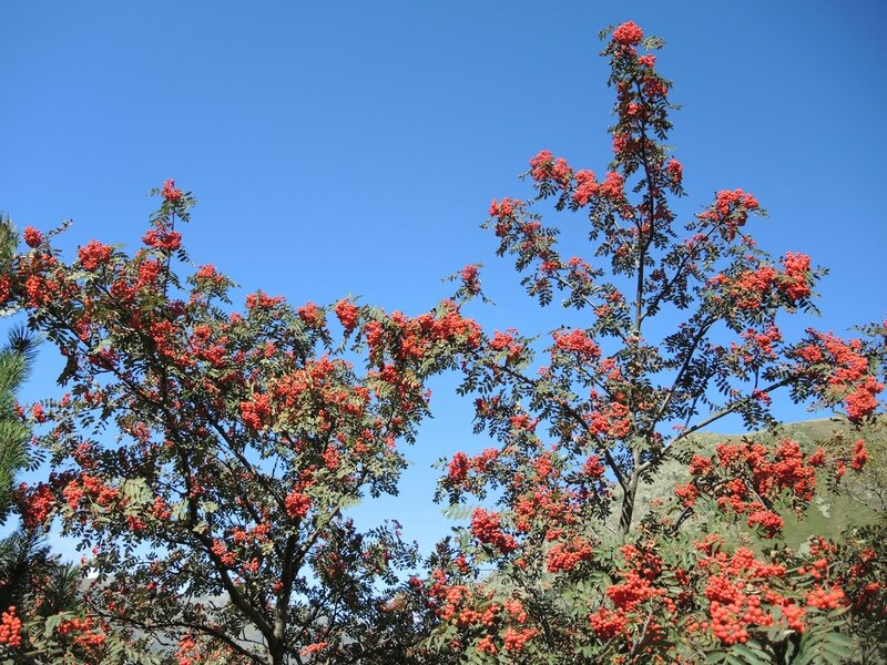 Refuge de la Glère, vallée de la Glère, arbres rouges (65)