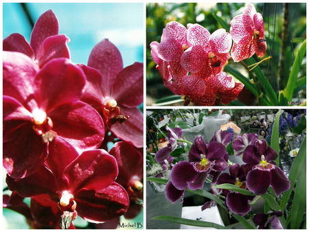 orchid_e_rose_4