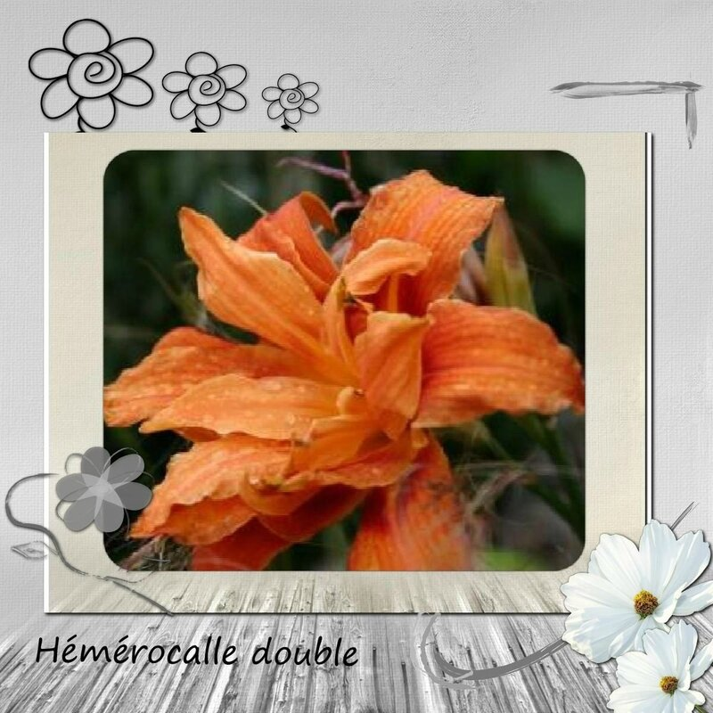 Juin fleur