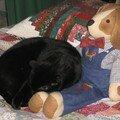 Félix lui a opté pour le chien