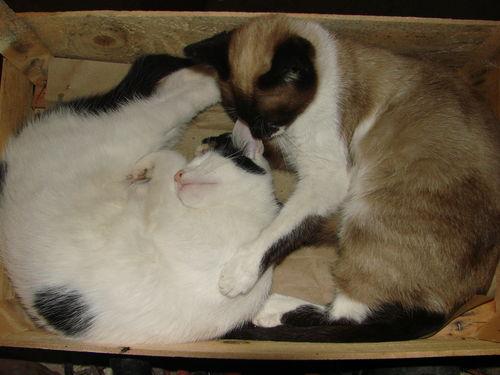 2008 09 03 La mère et le fils chat qui dorment dans la cagette