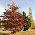 Arbre automne 3