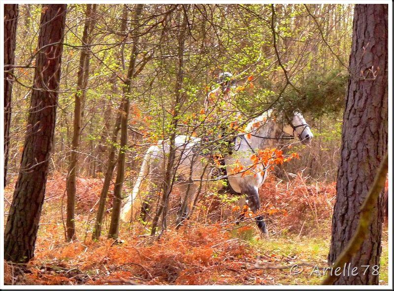 Cheval en forêt