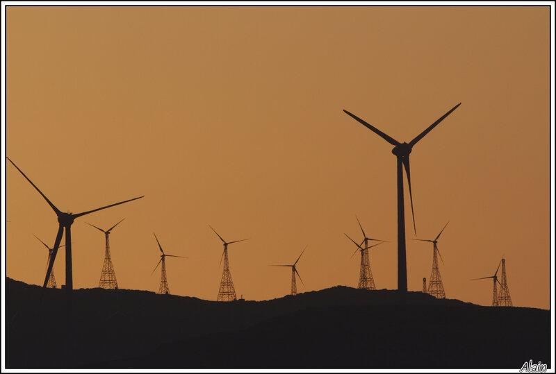 forêt de moulins à vent !