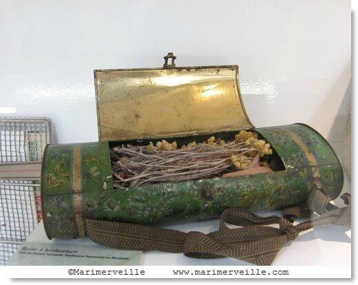 Boîte à herboriser - galerie botanique - Marimerveille