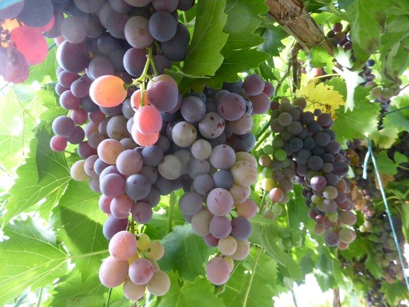 10-raisins (2)
