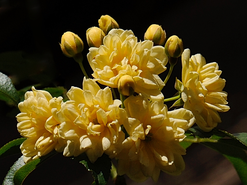 Bouquet jaune 1