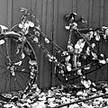 Marc marennes, vélos (2010, collection particulière)