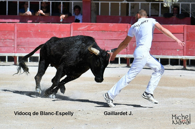 SALIN DE GIRAUD 04
