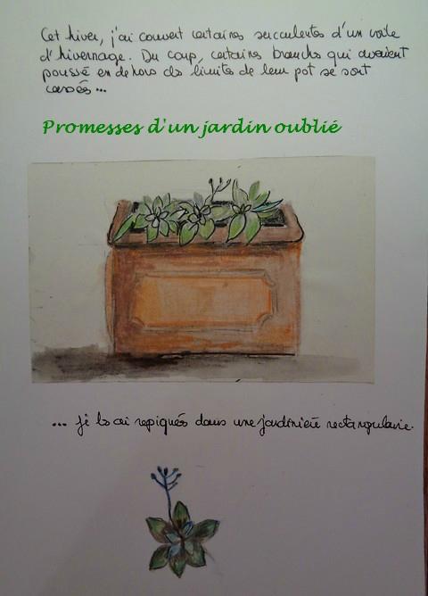 Le cahier du Jardin Oublié n°4