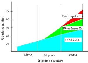 fibres et intensite charge